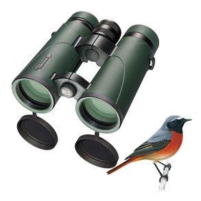 Fuglekikkerter